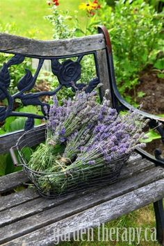 harvesting lavender from 17 great ways to use lavender at home