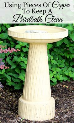 Use pieces of copper to help keep your birdbath clean. Really works!