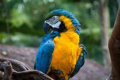 A Brazilian beautiful Arara.