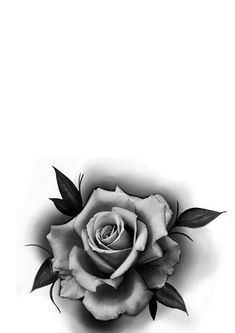Black And Grey Rose Tattoo, Grey Roses, Phone Wallpapers, Zen, Log Projects, Flowers, Storage, Wallpaper For Phone, Mobile Wallpaper