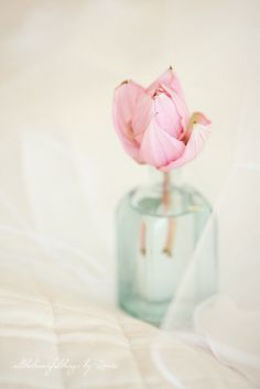 Pink  ♥ by loretoidas, via Flickr