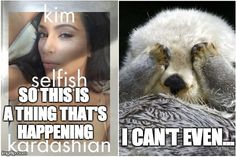 Otters react to Kim Kardashian's wretched book of selfie wretchedness.