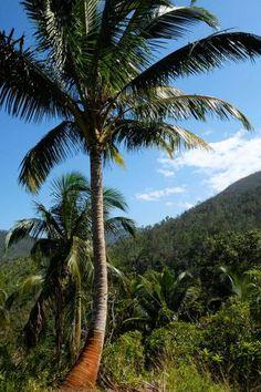 parque-nacional-alejandrohumboldt-palm