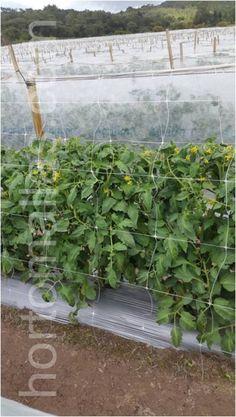 Trellis, The Expanse, Farmer, Grow Taller, Plants, Farmers