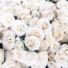 White roses {love}