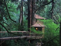 Tree house rainforest hotel in Seattle, Washington.