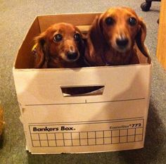 The Modern Dog office dogs tackle the filing. #JustAnotherDayAtTheOffice