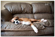 Boxer Puppy!!!! » Dog Photographer Leesia Teh