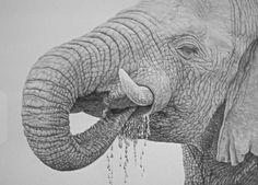 Elephant by Rita Niblock on ARTwanted