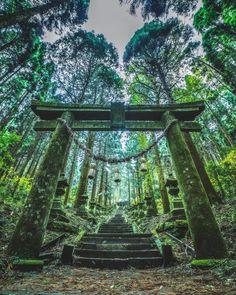 いいね!6,799件、コメント45件 ― Takahiro Hosoe(27)さん(@takaphilography)のInstagramアカウント: 「. 神聖な道。 . . ほんとは早朝に行きたかったけど、昼ど真ん中に来た! . やっぱまた早朝に行きたい✨ . いつかリベンジします . . Kumamoto,Japan