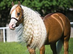 Untangle the secret to your horse's flowing tresses with these do's and don'ts.