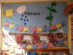 Beans Display, classroom display, class display, Plants, flowers, growth, growing, planting, watering, sun, Early Years (EYFS), KS1 & KS2 Primary Resources