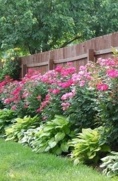 Knockout roses and hostas planted along fence >> This is so beautiful! rugged Knockout roses and hostas planted along fence >> This is so beautiful! rugged appeared first on Garden Diy. Front Yard Landscaping, Backyard Privacy, Backyard Ideas, Landscaping Tips, Privacy Fences, Azaleas Landscaping, Landscaping With Roses, Fencing, Backyard Landscape Design