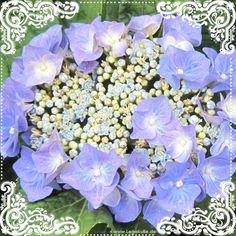 Sie finden auf dieser Seite lizenzfreie, weil von mir selbst fotografierte und verschönerte Bilder, kostenlos zum Download. #beautiful #wow #nice #nature #picture #flowerpicture