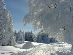 Winter in the Schwarzwald (Black Forest), Germany