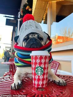 Less Talking, More Coffee - Doug the Pug Chihuahua, Pug Puppies, Cute Dogs And Puppies, Dug The Pug, Cute Baby Animals, Funny Animals, Pug Wallpaper, Pugs In Costume, Dog Collar Tags