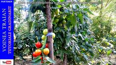Youtube, Avocado, Vegetables, Solar, Gardening, Plant, Lawyer, Lawn And Garden, Vegetable Recipes