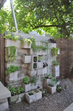 use cinder blocks against a backyard wall for some succulents!
