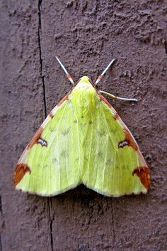 .Beautiful Green Moth - Unknown name