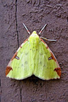 .Beautiful Green Moth - Unknown name