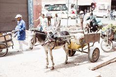 Marrakesch in 24 Stunden - Reisetipp Camel, Magic, Horses, Animals, Travel, Marrakech, Travel Tips, Animales, Animaux