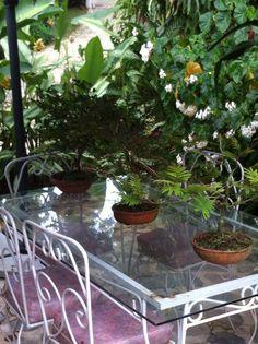 Comedor jardín Cisneros