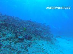 "The reef ""Las Jardines"" #tourguidekay   #tourguide   #playadelcarmen   #tulum   #cancun   #traveltips   #privatetours   #mexico   #privatetourguide   #diving #scubadiving #diving #underwaterfun"