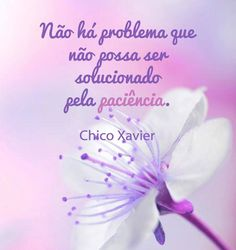"""""""Não há problema que não possa ser solucionado pela paciência"""" Chico Xavier."""