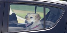 Smash a Car Window to Save a Pet? It's now OK in Tennessee to break into car with a distressed animal inside. Friendly, leashed animals and pets of ALL kinds are always welcome at Tractor Supply! Please leave them home on days warmer than 70 degrees if you're stopping by a place where they can't come inside!