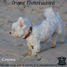 Lederhalsband für kleine Hunde verstellbar