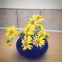 #wildflowers . . . #gelb #blumen #flowers #yellow #power #color #bright #beautiful #love #details #summer #bestoftheday #pic #nature #kuchen #kitchen #environment #deco #easy