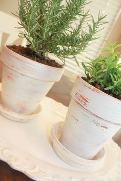 Easy Distressed Terracotta Pots with Herbs ... these micro gardens look great and clay pots just need a coat of paint (whatever colour suits your decor) and then sanding with a coarse sandpaper to get the distressed look you want! Add potting mix & your favourite herbs like lavender and rosemary. Gorgeous! | The Micro Gardener