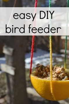 These simple citrus bird feeders are simple and fun to make!