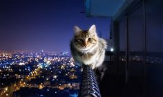 Fearless kitty is, well, fearless. L - Oh noes. This photo makes me all nervous like I'm looking over the edge of the building myself. Please get down, kitty. Cool Cats, I Love Cats, Hate Cats, Funny Cats, Funny Animals, Cute Animals, Diy Funny, Baby Animals, Crazy Cat Lady