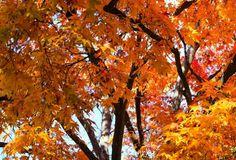 弘前公園は弘前市、青森県にあります