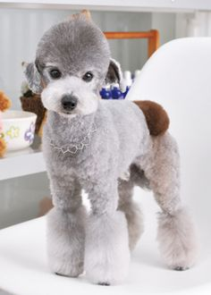Dog Grooming Styles, Poodle Grooming, Cat Grooming, Little Dogs, Big Dogs, Asian Dogs, Creative Grooming, Dog Spa, Tea Cup Poodle