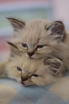 Kittens resting