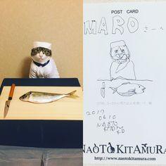 『昼顔』に絵画作品を提供された北村直登さん にマロの絵を描いて頂きました❣️ Thank you for wonderful drawing @kitamura_naoto #cat#cats#catstagram#catsofinstagram #instacat_meows#instacat_models#art #drawing#picture#chef#fish#にゃんこ #ねこ#猫#みんねこ#ふわもこ部#北村直登 #naotokitamura#昼顔#mannishboys
