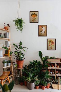 Room With Plants, House Plants Decor, Plant Decor, My New Room, My Room, Room Ideas Bedroom, Bedroom Decor, My Living Room, Living Room Decor