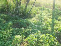 Feeding Compost Worms: What, When, & How {Guest Post} | The Prairie Homestead