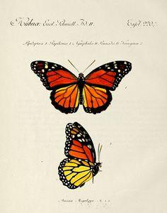 Reproduisez tout le détail et la majesté des ailes du monarque grâce à la technique du Zendoodle. Facile!