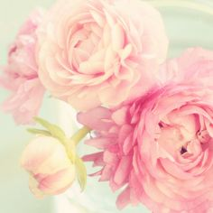 Florabella and pale creamy pink ranunculus; does it get any better?