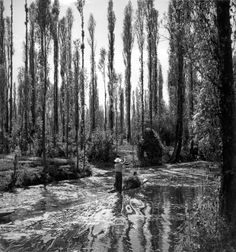 Xochimilco , 1950 by Juan Rulfo, the novelist....He was a photographer before he wrote The Burning Plain and Pedro Paramo. The three main themes of his photography are architecture, landscape and ethnography. The camera became his constant companion until 1962; afterwards he would engage in photography only occasionally. Yet he generated a vast output. There are more than six thousand negatives, now guarded by the Foundation Juan Rulfo.