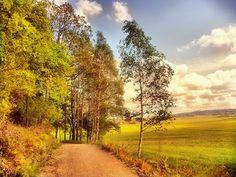 дорога... поле...лес