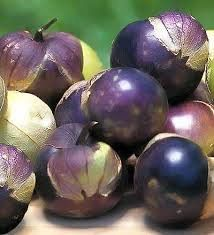 Purple Tomatillo : Beautiful purple fruit, large size. Many are a bright violet color throughout their flesh. Much sweeter than the green types; it can be eaten right off the plant. Turns purple when ripe. RARE!