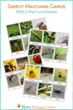 This free insect matching 3-part card printable is used to help your child become familiar with new vocabulary and develop visual discrimination.