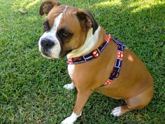 Custom Team Dog Harnesses by LucyLous22 on Etsy, $30.00