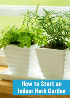 how to add more plants to your room