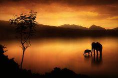 """Elephants at Sunset""  by Jenny Woodward"