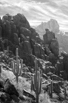 Down slope view of Saguaro Cactus and granite rock formations in the Superstition Mountain Wilderness, Arizona. Angelo Andiario Photographic Art.
